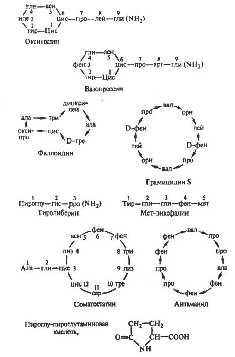 Биологически активные пептиды