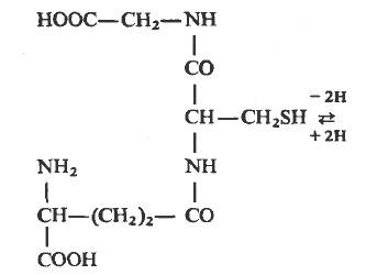 HS-Глутатион (восстановленная, сульфгидрильвая форма)