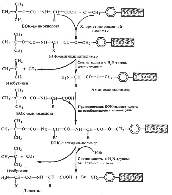 Схема твердофазного синтеза пептидов и белков